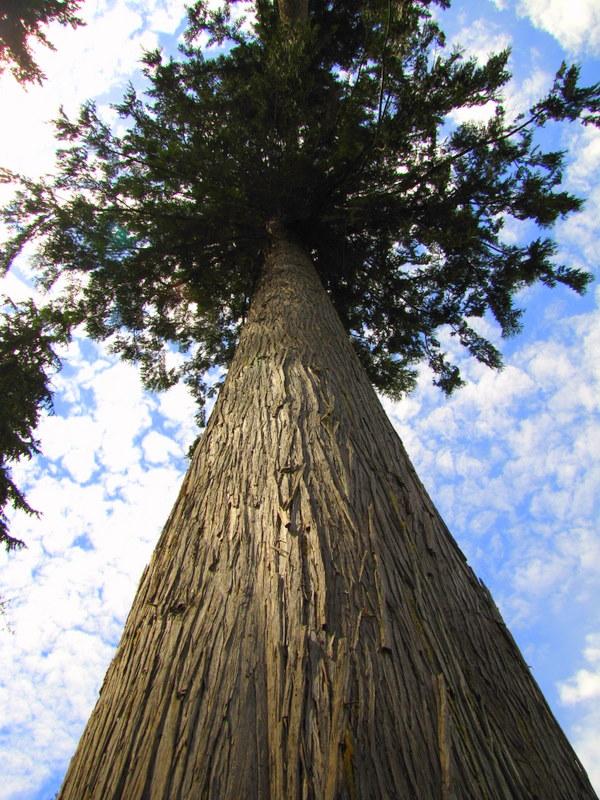 Cedar Siding Vancouver Wa Portland Or